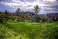 Bali: People and Landscapes