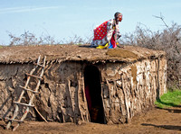 Masai Woman Repairs Hut's Roof with Cow Dung