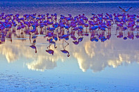 """Flamingoes in the Clouds"" in Lake Nakuru"