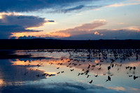 Nightfall Over a Huge Flamingo Flock, Lake Nakuru, Kenya