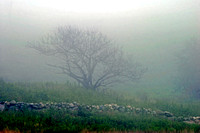 Tree and Stone Wall in the Fog
